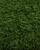 GRASS-F4017